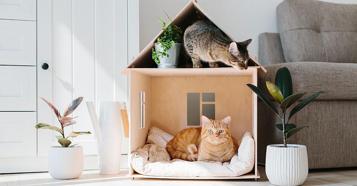 animali domestici in condominio